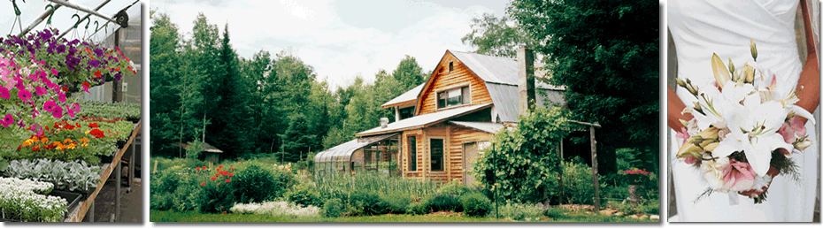silver_sage_greenhouse_port_wing_wisconsin